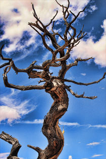 Canyonlands Tree by Charlie Poehls