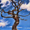 Witchy-tree-sky