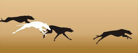 Gnubier1227-greyhoundrace
