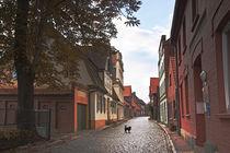 Street Dog by pahit