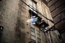 Citybird by Mert Senturk