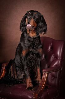 A portrait of Gordon setter... by Tanya Kozlovsky