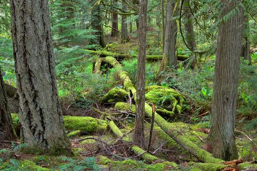 Rainforest5476