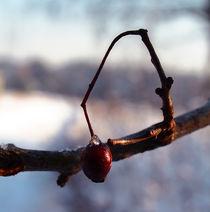 Frozen drop by Alicja Bzdak