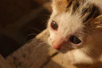 cat von Dario Fiorentino