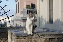 greek cat by Milena Zindovic