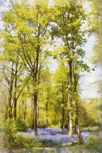 Bluebell woods in the spring von Graham Prentice