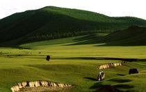 Green Gobi Desert by Carlos Filipe Flores