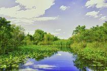 Everglades by Pedro Dominguez