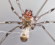 Spider - Arachnophobes beware!