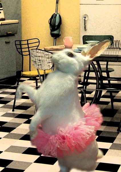 Rabbit-a4