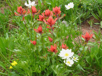 Summer Wildflowers by Margaret Bowles