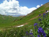 Colorado Summer Scene by Margaret Bowles
