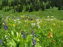 Wildflowers by Margaret Bowles