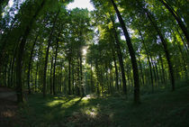 Foresterial landscape von Andreas Müller