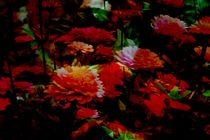 Orangenblumen von Kathrin Kiss-Elder