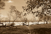 Avellanas, Costa Rica von Adriana Schiavon