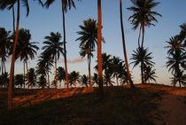 Brazil-bahia2