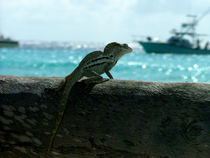 Iguana looks the sea von Adriana Schiavon