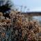 Patagonia-flowers