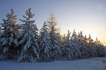 Schneelandschaft im Abendrot by Wolfgang Dufner