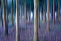 Abstract Trees by sakis-iatropoulos-photography