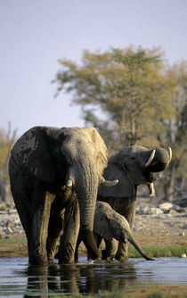 Elephants at Waterhole by Wolfgang Kaehler