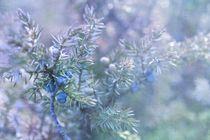 juniper von Priska  Wettstein