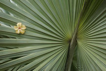 Palm Leaf with Hibiscus Flower by Wolfgang Kaehler
