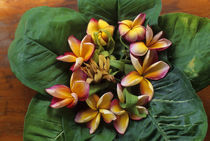 Offering with Frangipani Flowers von Wolfgang Kaehler