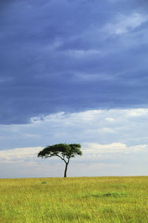 Grassland Landscape with Tree by Wolfgang Kaehler