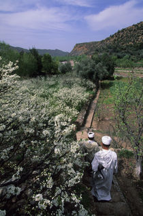 Berber People In Almond Orchard by Wolfgang Kaehler