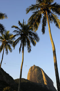 Coconut Palm Trees by Wolfgang Kaehler