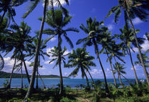 Coconut Palm Trees on Beach von Wolfgang Kaehler