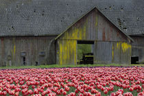 Old Barn In Background by Wolfgang Kaehler