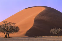 Sand Dune with Trees by Wolfgang Kaehler