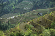 Farmers Working In Terraced Fields von Wolfgang Kaehler