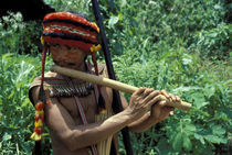 Jivaro Indian Playing a Traditional Flute by Wolfgang Kaehler