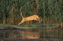 Jumping Over Water by Wolfgang Kaehler