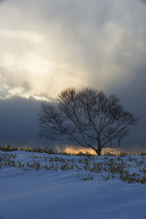 Tree on Crater Slope In Sunset with Dramatic Clouds von Wolfgang Kaehler