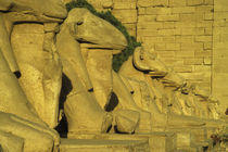 View of the Ram Statues at the Entrance to the Temple of Karnak by Wolfgang Kaehler