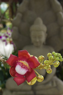 Buddha Statue In Background by Wolfgang Kaehler
