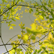 Luminous leaves by rolento