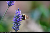 Flowers & bee #2 by and979