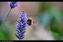 Flowers & bee #2 von and979