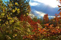 Colors of Autumn by Darien Hoogacker
