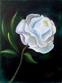 weiße Rose by Christa Leyer
