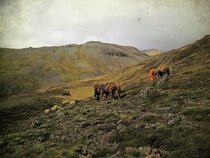 Gathering sheep in the Highlands of Iceland, using horses von Kristjan Karlsson