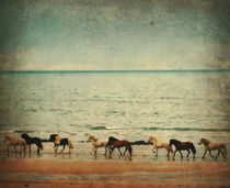 Icelandic horses running at the beach by Kristjan Karlsson