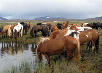 Horses at rest in the Highland of Iceland by Kristjan Karlsson